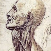 Leonardo Da Vinci Human Anatomy The Drawings Of Leonardo Da Vinci - Human Anatomy Diagram