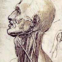 Leonardo Da Vinci Human Anatomy The Drawings Of Leonardo Da Vinci - Human Anatomy Diagram